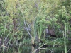 Airboat Boogy Creek