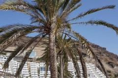 Gran Canaria - 2017-08-23-17h04m31-